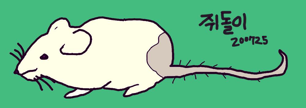 쥐돌이.png