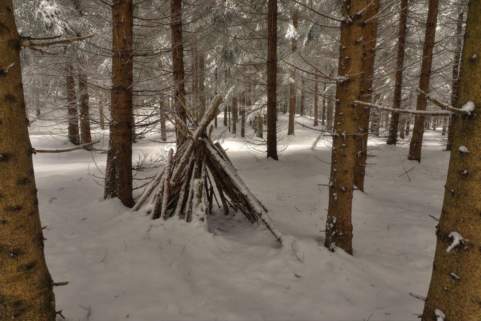 deep_winter_forest_by_burtn-d8jyzb6.jpg