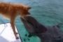 은하시민 - 개와 돌고래